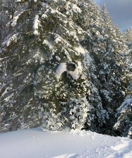 камуфляж снег