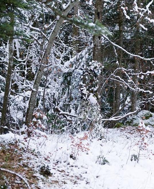 камуфляж в зимнем лесу