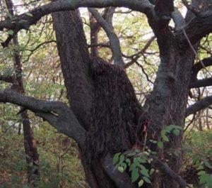 Маскировочная накидка для леса